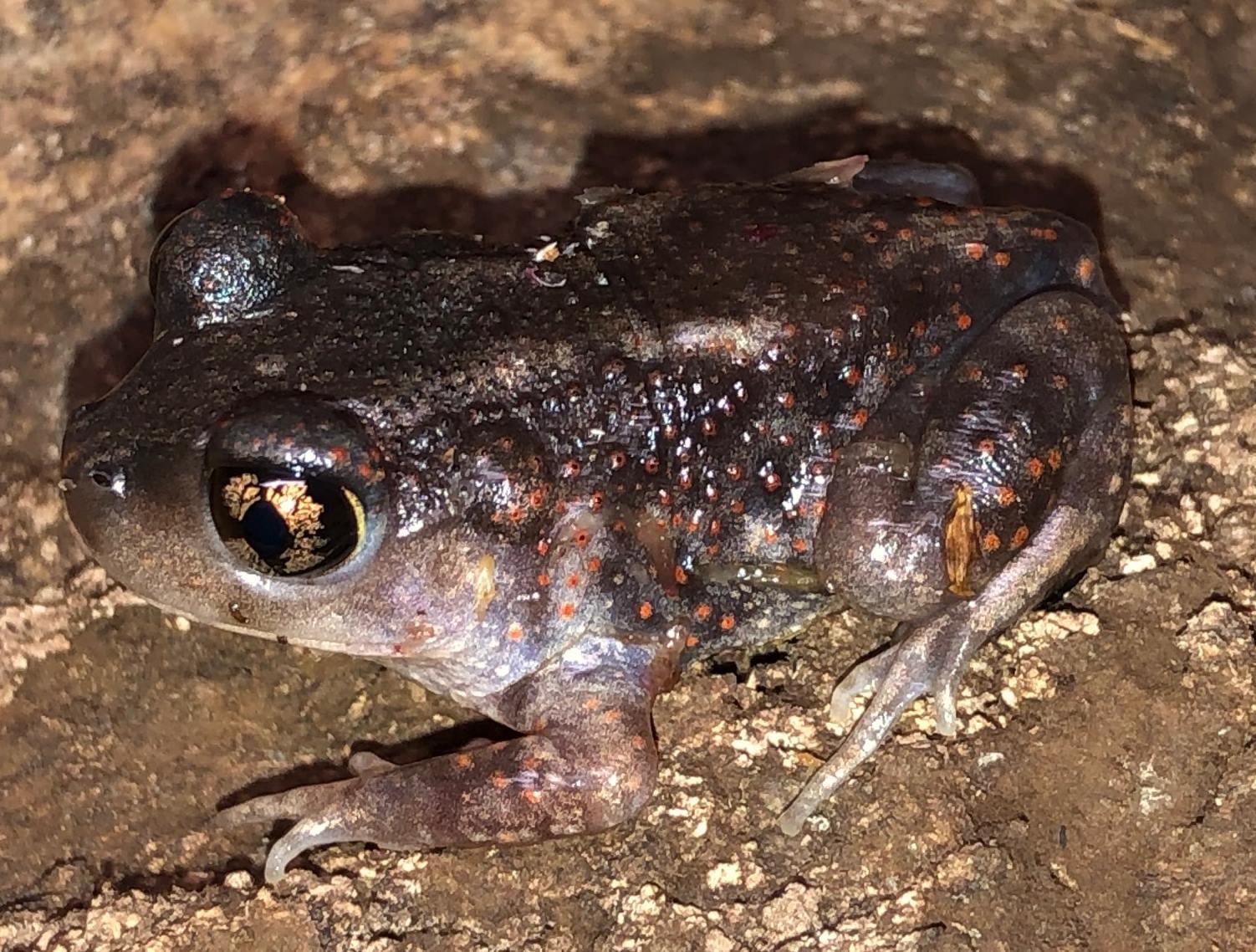 Amphibian Pricelist